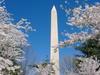 20th_anniversary_cherry_blossoms_knittin_5